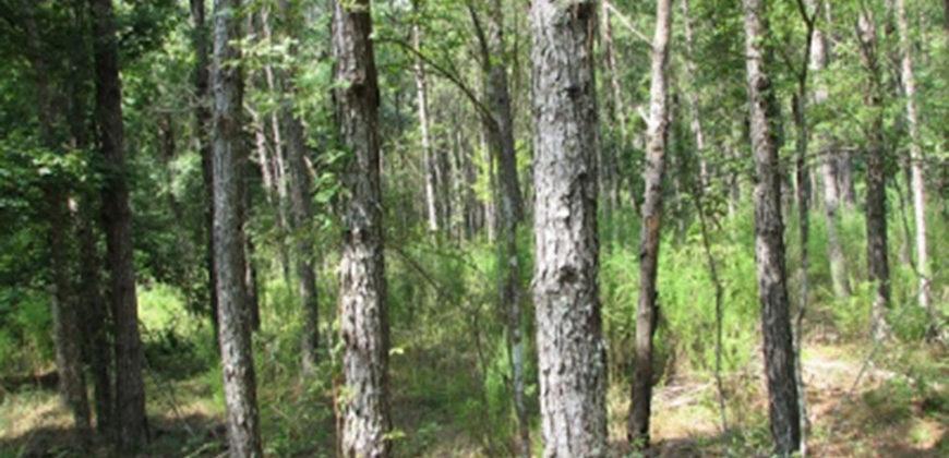 LAFAYETTE COUNTY, FL (7,611 acres)