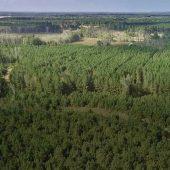 International Paper Land Deal Spans Four States