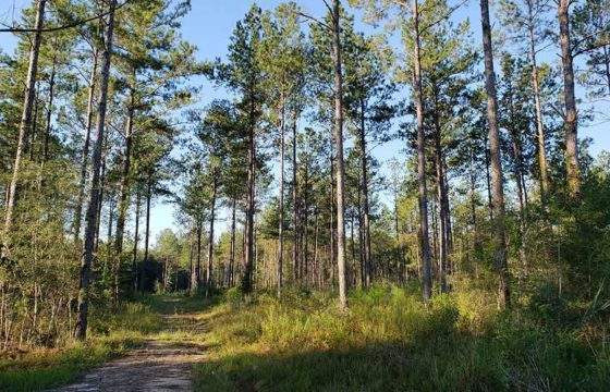 PEARL RIVER COUNTY, MS (1,798 acres)