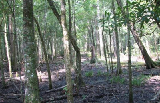 LAFAYETTE COUNTY, FL (484 acres)