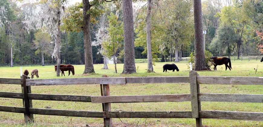 WILLIAMSBURG COUNTY, SC (3,680 acres) SOLD