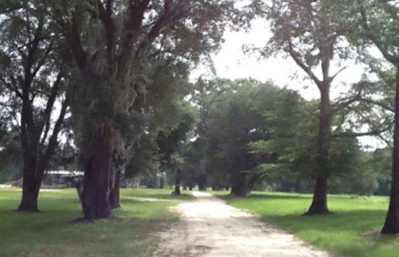 JACKSON COUNTY, FL (377 acres)